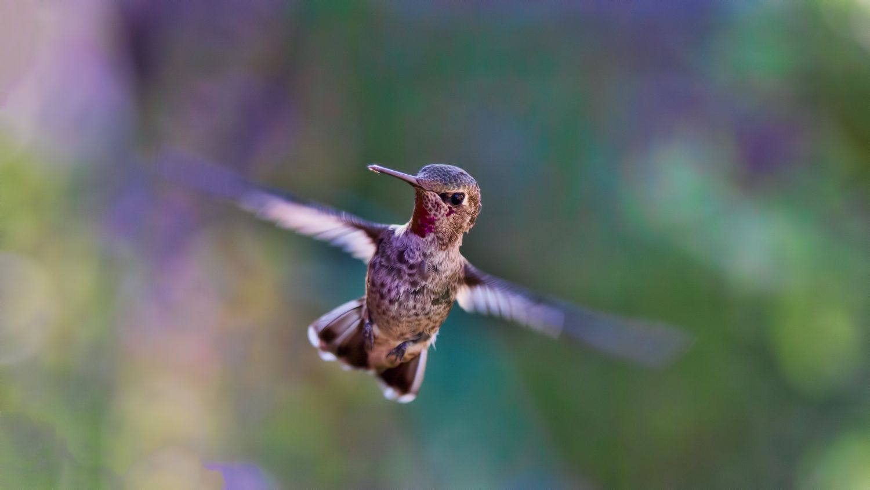 Ein Kolibri fliegt in der Luft; Thema: Energieeffizienz