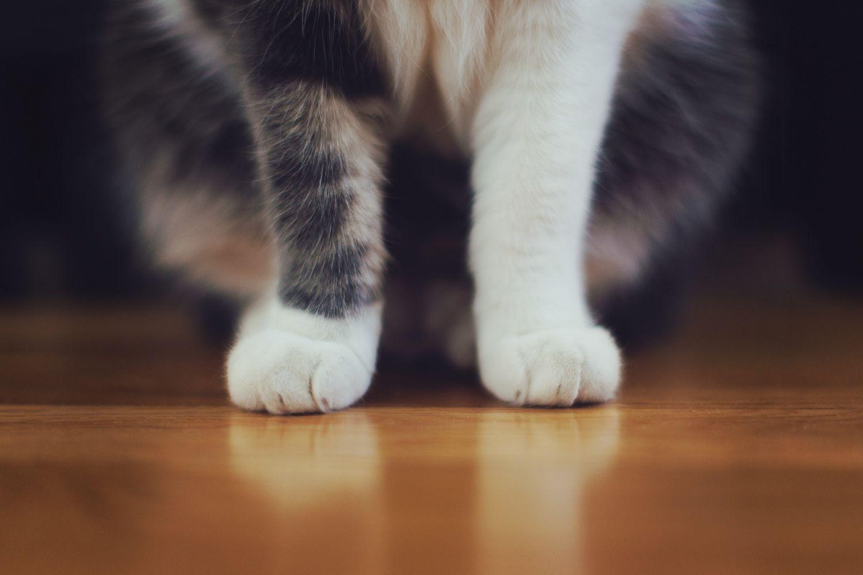 Katzenpfoten; Thema: Lärmreduzierung im Schienenverkehr